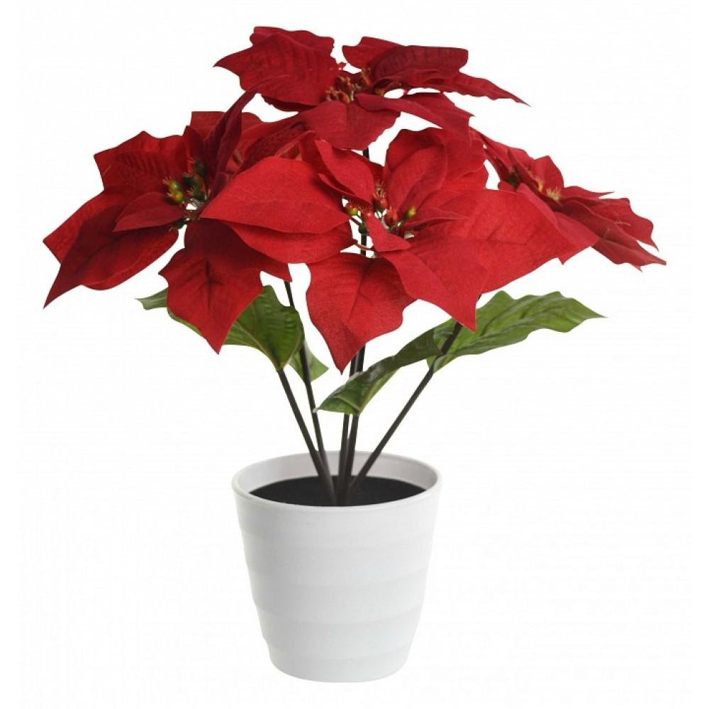 Растения в горшке Globo Orphelia 28024