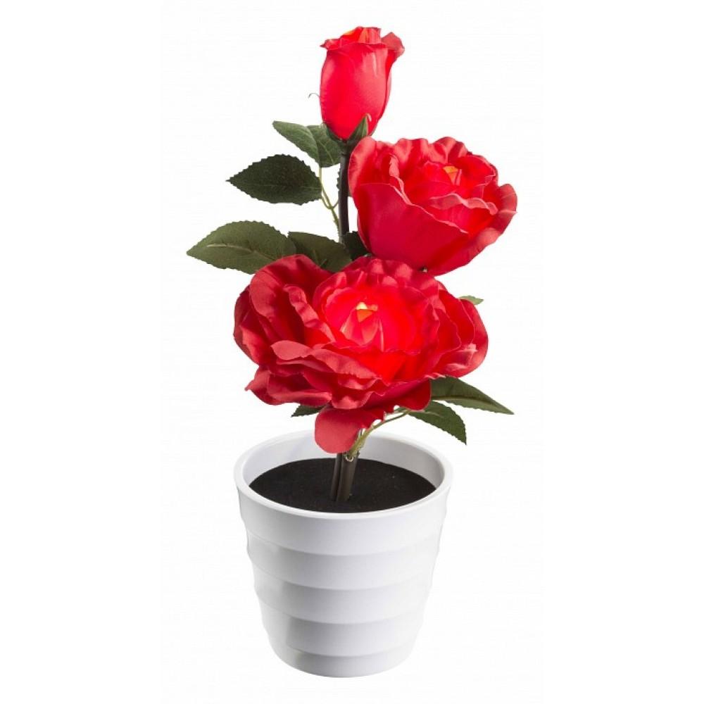 Растения в горшке Globo Orphelia 28026