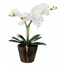 Растение в горшке Globo Flowerpower 28002